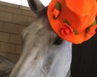 Quabbe orange hat sep-16 - 1